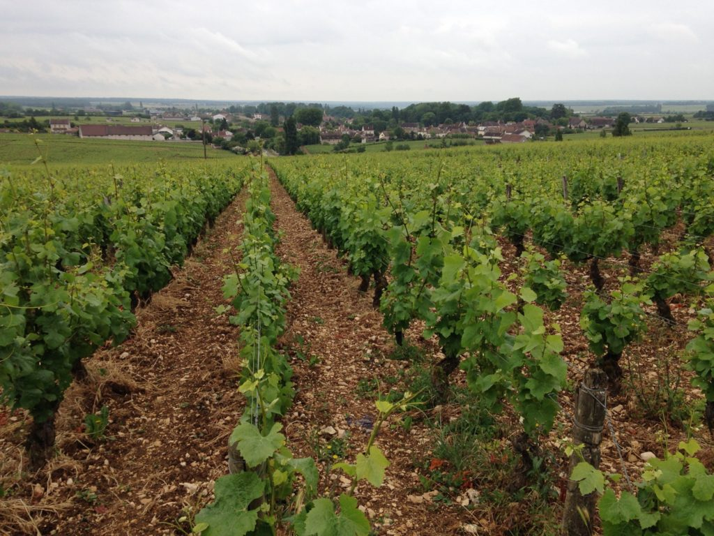 Chambolle-Musigny (pic. Euan McKay)